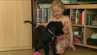 The dog that is proving a lifesaver to a little girl with diabetes