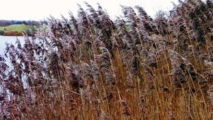 Wind picks up around a lake in Lichfield, Staffordshire