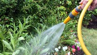 Hosepipe watering a garden