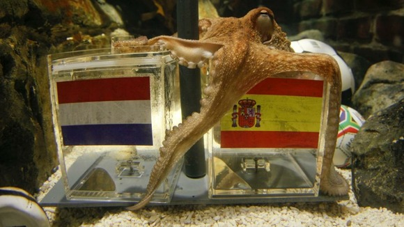 Paul the Octopus correctly predicted Spain would triumph over the Netherlands in the 2010 World Cup final