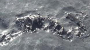 200 million-year old fossil found Dorset beach
