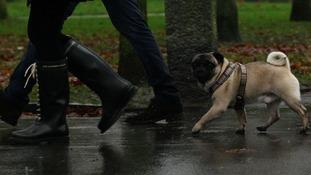 Dog divorce