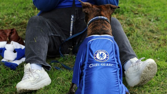 Dog &#x27;Roxy&#x27; before before the FA Cup and UEFA Champions League trophy parade in London