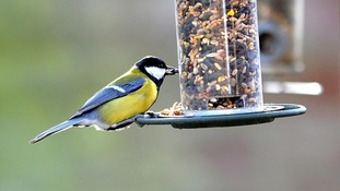 Big Garden Birdwatch: how you can get involved