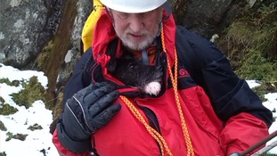 The terrier was tucked into a rescuer's jacket and lowered to safety