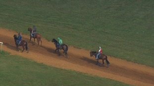 Horses being exercised at Newmarket