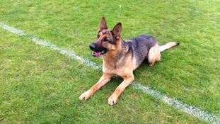 Heroic Suffolk dog wins award after stabbed on duty