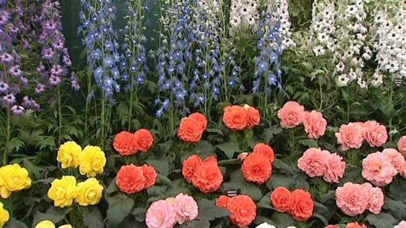 Chelsea flower show channel 4