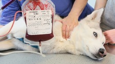 Dog and cat blood banks have been in operation for more than a decade.