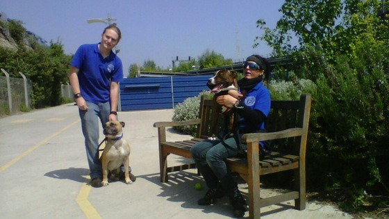 Homeless dogs with staff at Battersea Dogs and Cats Home.