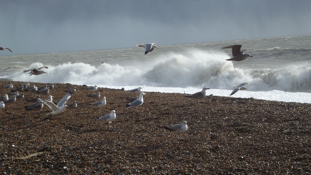Story Weather For Seabirds In Sussex