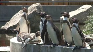 Marwell Zoo celebrates 40 years