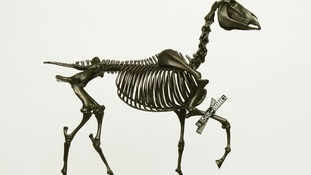 Gift Horse, Hans Haake