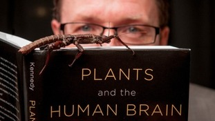 Is the human brain similar to that of an insect?