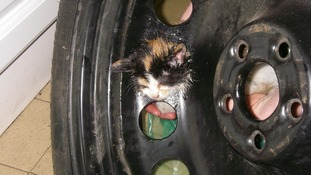 Alloy the Kitten freed from car wheel