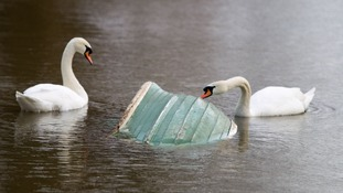 Swans with a submerged boat on the flooded banks of the River Thames in Chertsey, Surrey