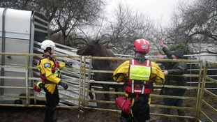 An RSPCA flood rescue team directs horses into a corral in Dorset