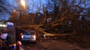 Fallen tree on Barlow Moor Road