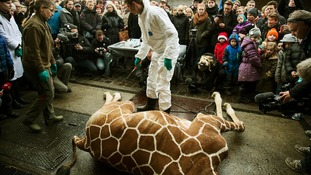 Why Danes are not shocked by giraffe-killing