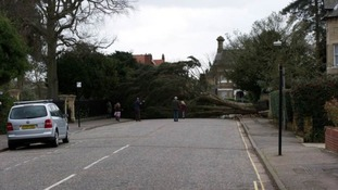 A fallen tree in the Lexden area of Colchester, Essex