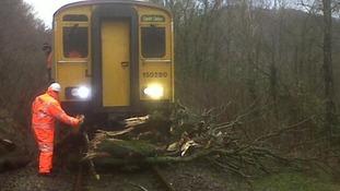 tree on railway line