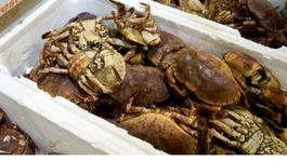 £1000s' worth of crab pots lost at sea