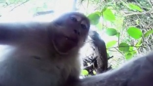 Cheeky monkey steals camera to take a series of selfies