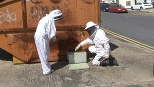 The sunshine has got many of the region's honeybees on the move too.