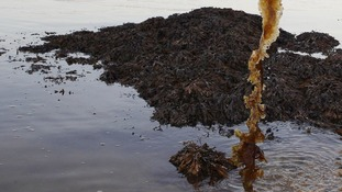 How seaweed could help us lose weight
