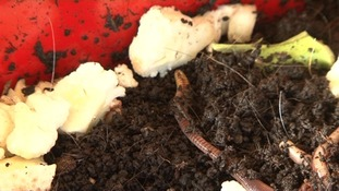 The worms will create a liquid fertiliser.