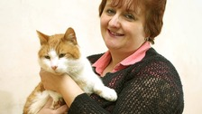 Missing cat returns after eight years on the run