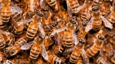 Thousands of 'killer bees' attack woman