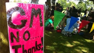 Protesters stage demo over GM crop