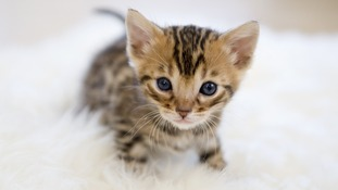 Internet interest in kittens surprises Sir Tim Berners-Lee