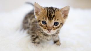 Internet interest in kittens surprises Sir Tim Berners-Lee