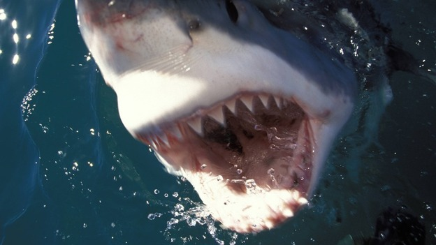 Shark ITV News - Man fights great white shark sydney harbour jumping cliff