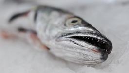 Bid to boost hake eating
