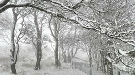 Snow finally arrives on Dartmoor