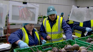 Workers in hi-vis jackets in front of crates of beetroot