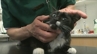 Vet Carl Gorman gives a cat check-up.