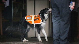 A dog from Trossachs Search and Rescue attends the service at St. Andrew's Cathedral in Glasgow.
