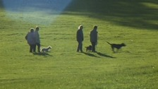 dog walkers in park