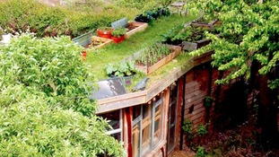 An allotment roof garden in London.