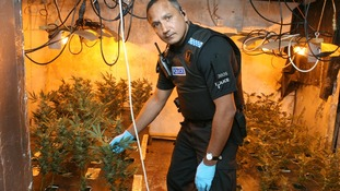 Cannabis factory discovered in Essex house