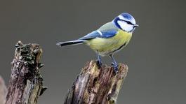 The Big Garden Birdwatch results are in