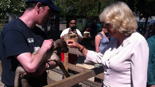 The Duchess of Cornwall strokes a lamb.