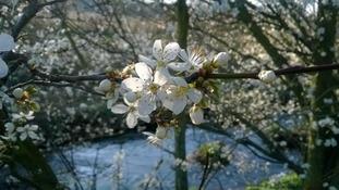 Blossom - Newhall Park