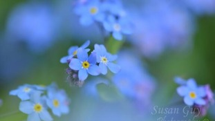 Forget Me Knots Leicestershire