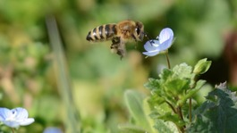 75% of bee species lost in West Country counties