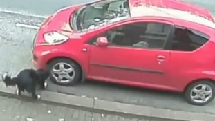 The tyre slasher dog is caught red-handed on CCTV.